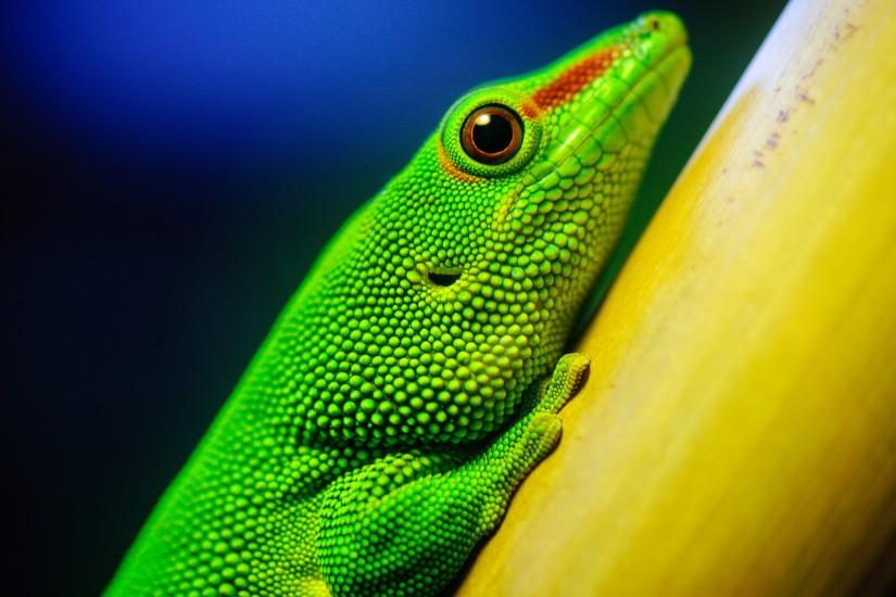 Little Green Lizard 4K Ultra HD