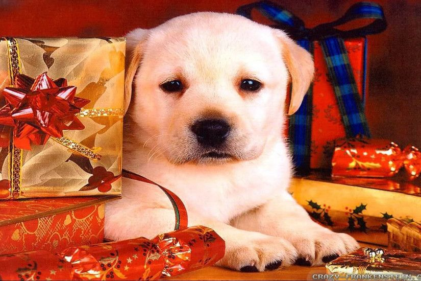 Wallpaper: Puppy Christmas Dog wallpapers. Resolution: 1024x768 | 1280x1024  | 1600x1200. Widescreen Res: 1440x900 | 1680x1050 | 1920x1200