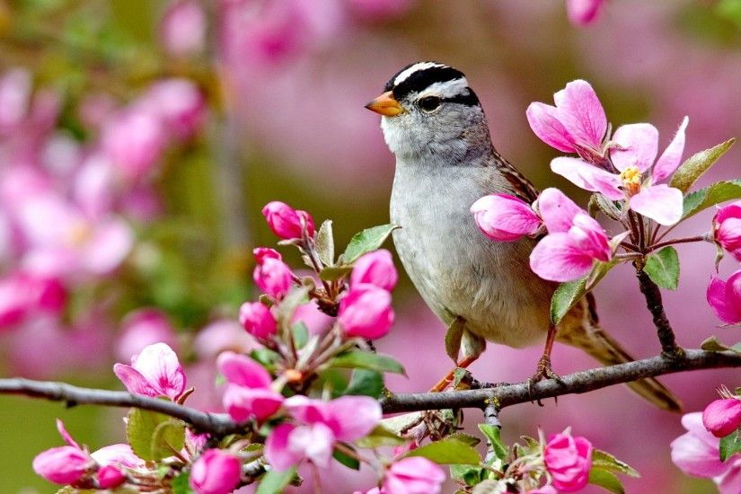 Spring Animal Desktop Backgrounds HD With ID 7704 On Animals Season Category In Wallpapers