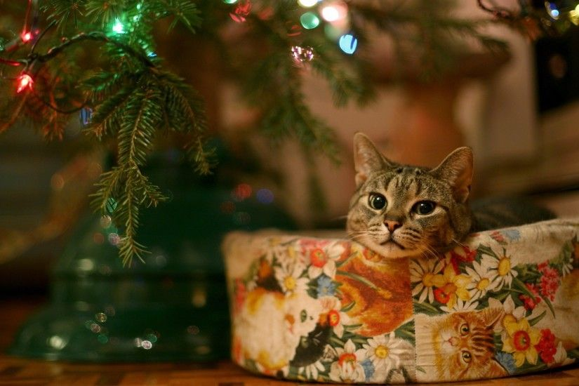 ... cat wallpaper; widescreen wallpapers of christmas ...
