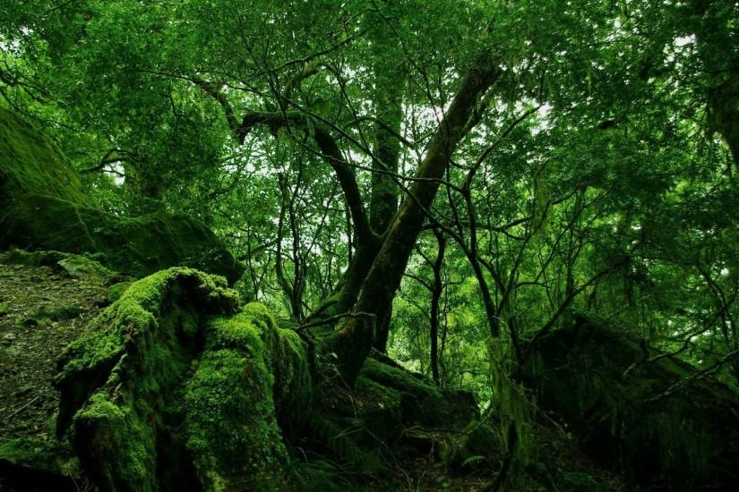 Preview wallpaper jungle, wood, green, moss, lianas, thickets 2560x1440