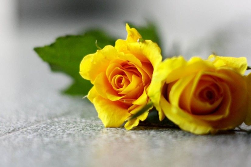 Beautiful Yellow Flowers Wallpapers