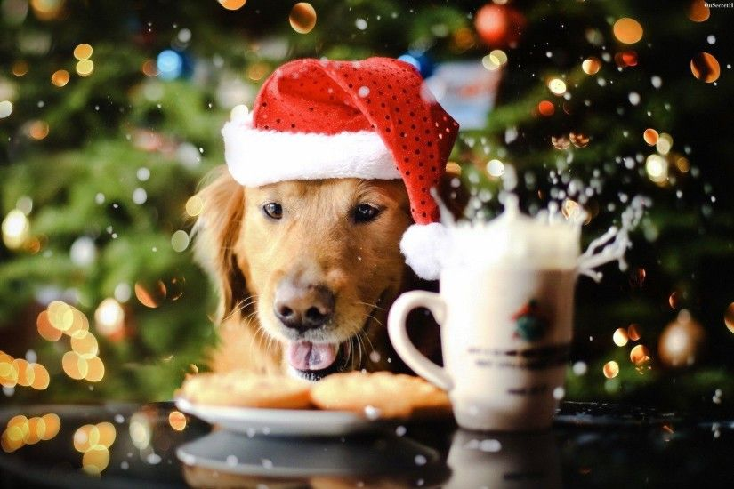 Dog Wallpapers - Full HD wallpaper search. Christmas ...