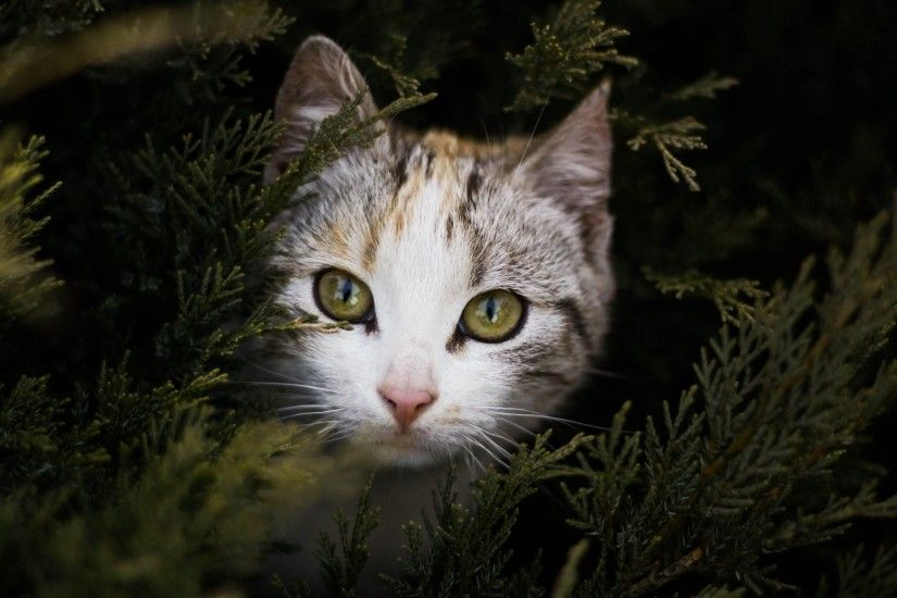 Cat Peeking Out Behind Branches Wallpaper