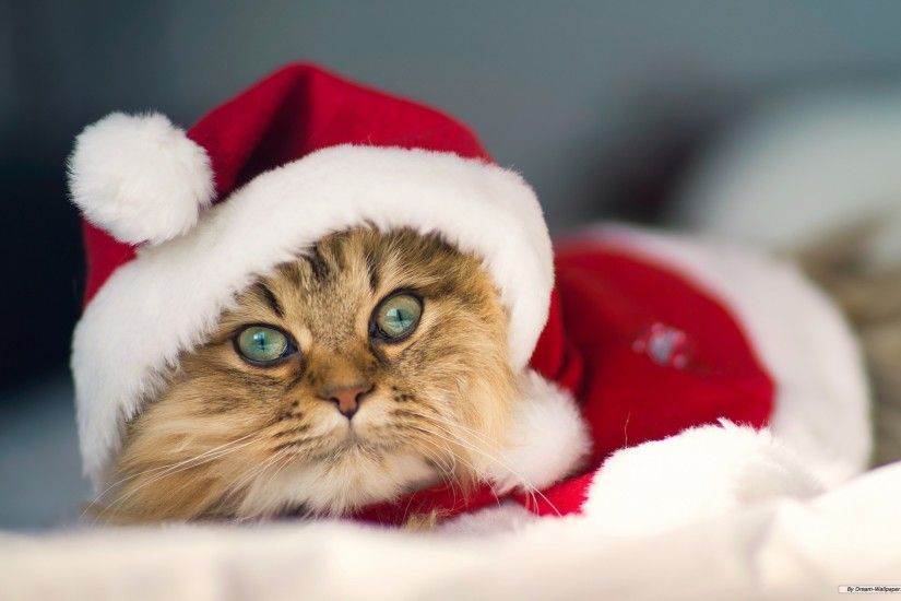 Free Holiday wallpaper - Christmas cat wallpaper - 1920x1200 wallpaper -  Index 9