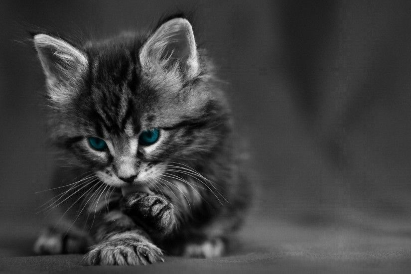 Preview wallpaper cat, black white, blue, eyes, baby, beautiful 1920x1080