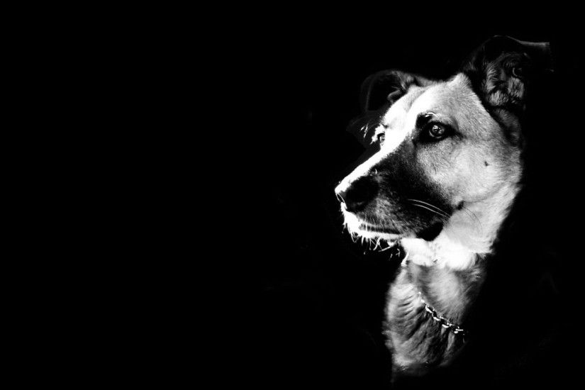 undefined Black And White Dog Wallpapers (48 Wallpapers) | Adorable  Wallpapers
