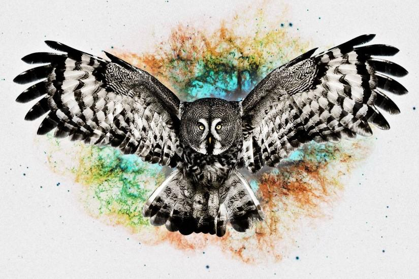 owl wallpaper 1920x1080 for iphone