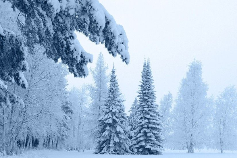 Thick snow on the trees in the foggy forest wallpaper
