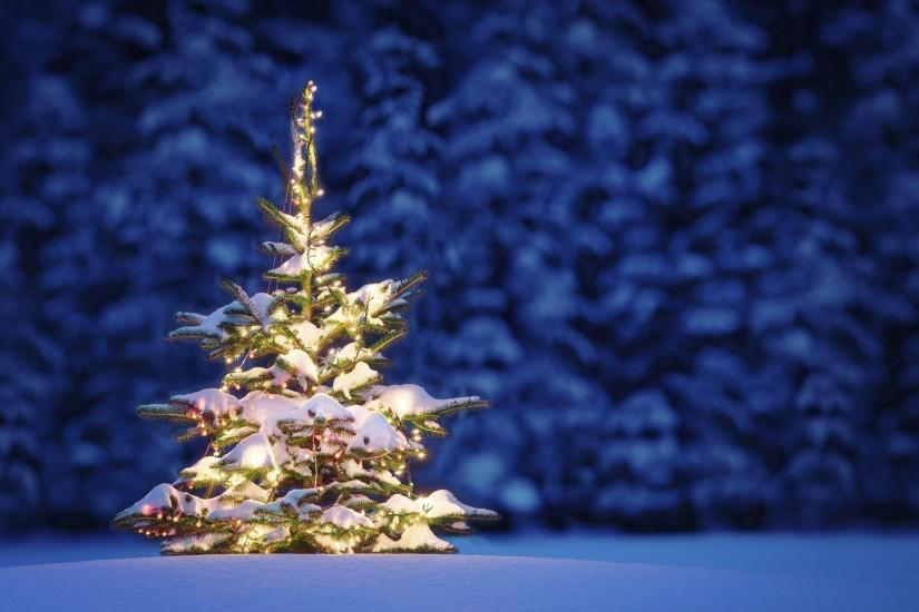 christmas tree background 2560x1600 for phone