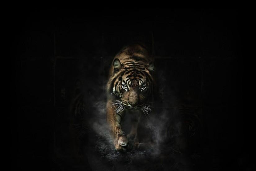 Tiger Wallpaper Download Free Awesome High Resolution