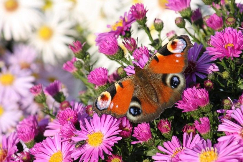 Butterfly Wallpapers Free Download 52 Wallpapers Source · Beautiful  Butterflies and Flowers Wallpapers 56 images