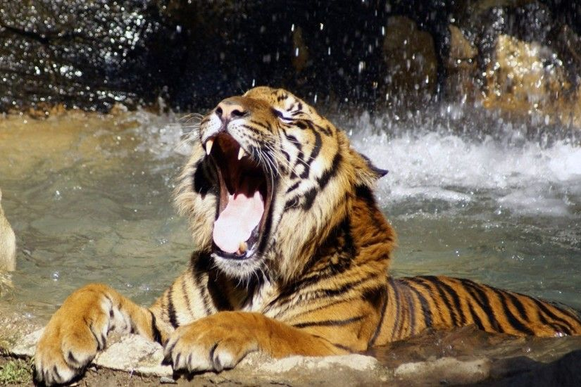 1920x1080 Wallpaper tiger, face, teeth, water, anger, predator
