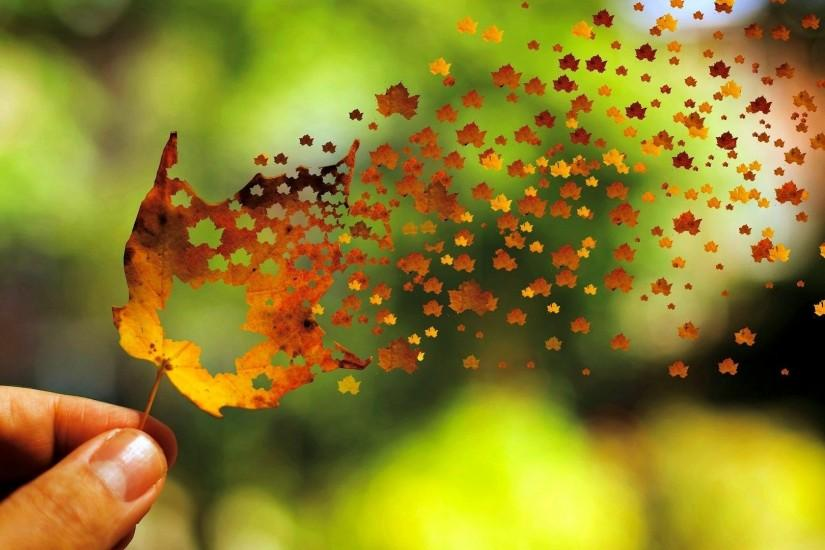 Autumn Leaves Wallpapers Widescreen
