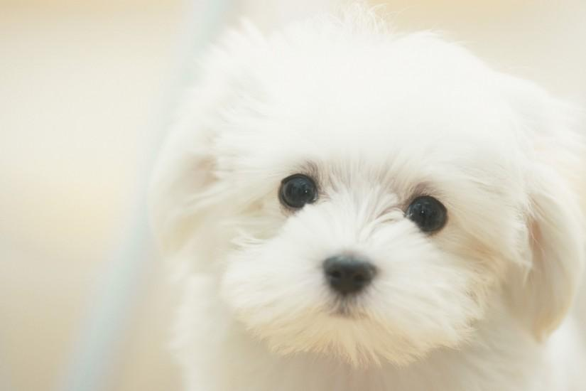 puppy wallpaper 1920x1080 for ipad