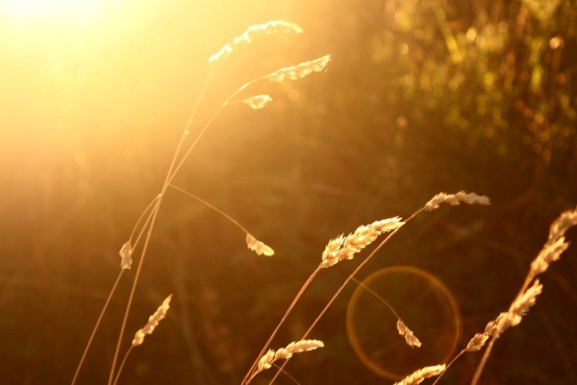 wheat, Sunlight, Blurred, Nature, Lens Flare Wallpapers HD / Desktop and  Mobile Backgrounds
