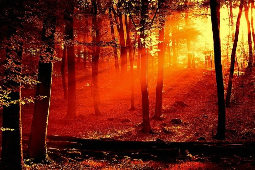 ... (2560x1600) - Forest Fire Wallpapers, Edie Teston ...