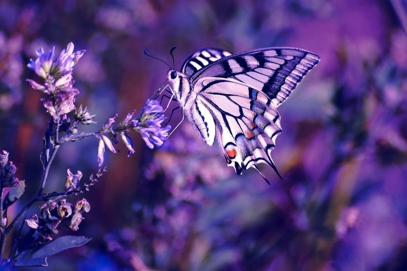 1920x1080 Beautiful butterfly. How to set wallpaper on your desktop? Click  the download link from above and set the wallpaper on the desktop from your  OS.