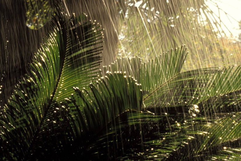 Rainy Season HD desktop wallpaper Widescreen High