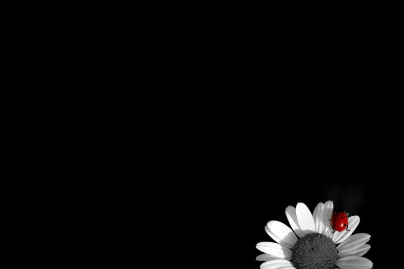 Black-and-White-Flower-