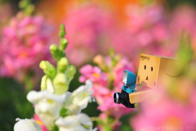 Cute Background Wallpaper PC Danbo