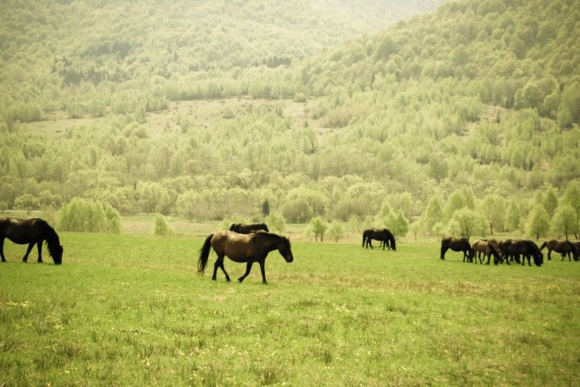 Wallpaper: Wild Horses Herd