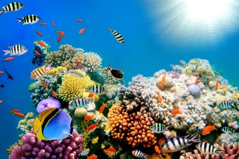 wallpaper details file name amazing fish background category fish file .