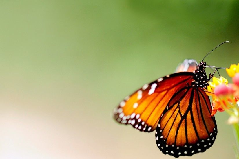 Preview wallpaper butterfly, wings, patterns, bright, insect 1920x1080
