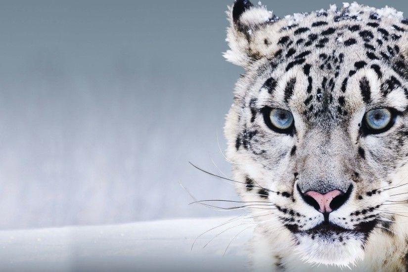 os x snow leopard wallpaper 183��