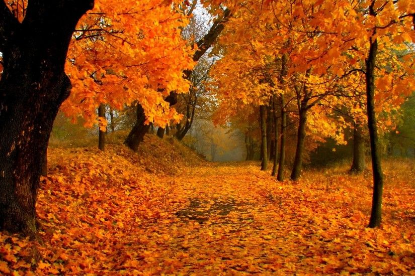 Free Download Fall Foliage Wallpaper.