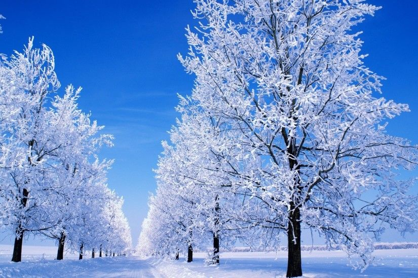 winter scene great snowy background wallpapers 1920x1080