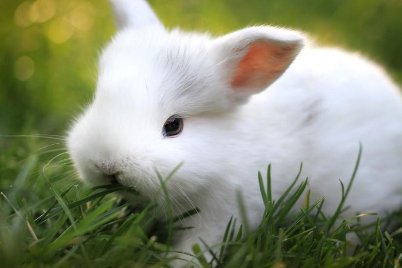 Cute Bunny Wallpapers Wide ...