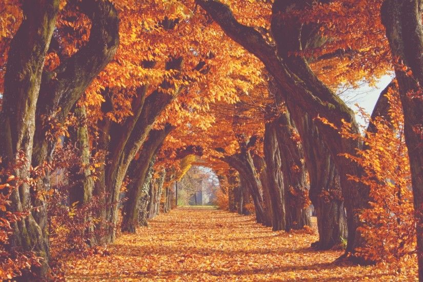 Image result for autumn background tumblr