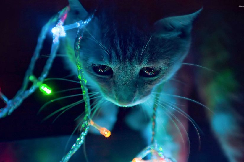 Kitten playing with the Christmas lights wallpaper 1920x1200 jpg