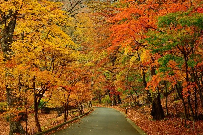 Preview wallpaper autumn, park, trees, road 3840x2160