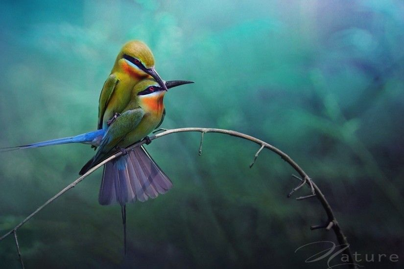... individuals to upload images to an internet website to share them with  friends lovebirds hd wallpaper ...