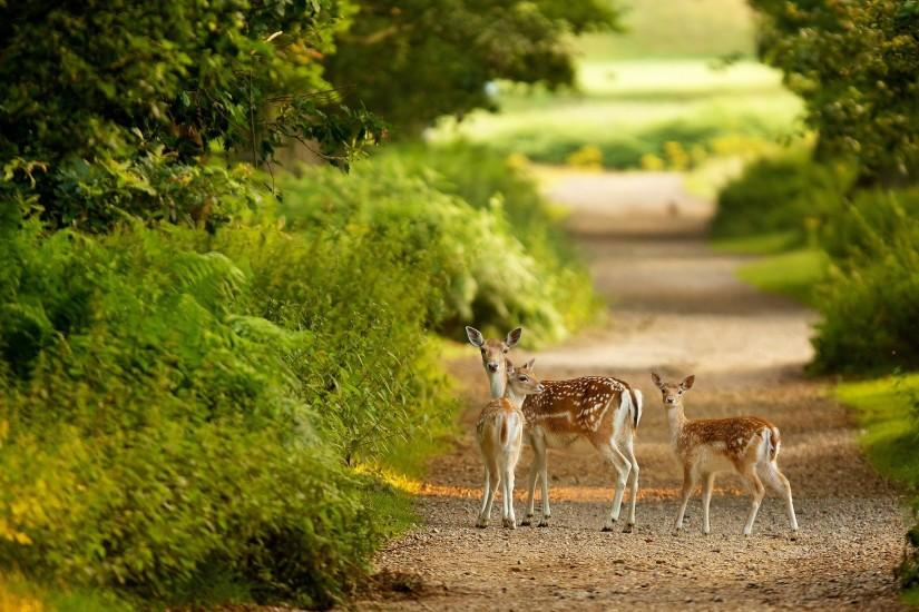 Deer Desktop Wallpapers | Stag Backgrounds | One HD Wallpaper Pictures .