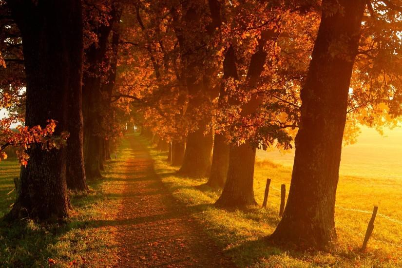 large autumn wallpaper 2560x1600 for tablet
