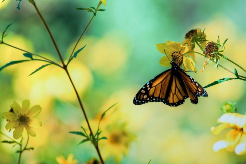 Daily Wallpaper: Butterfly Garden | I Like To Waste My Time