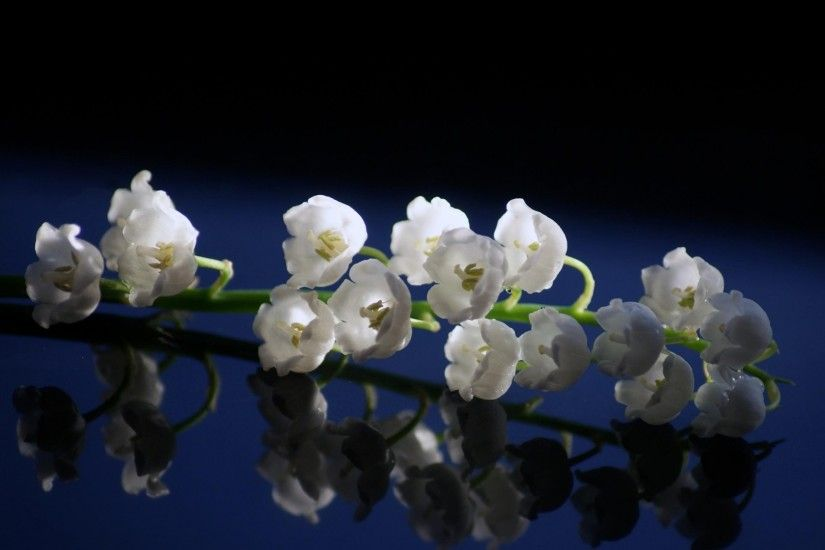 Preview wallpaper lily of the valley, close up, spring, surface, reflection  1920x1080