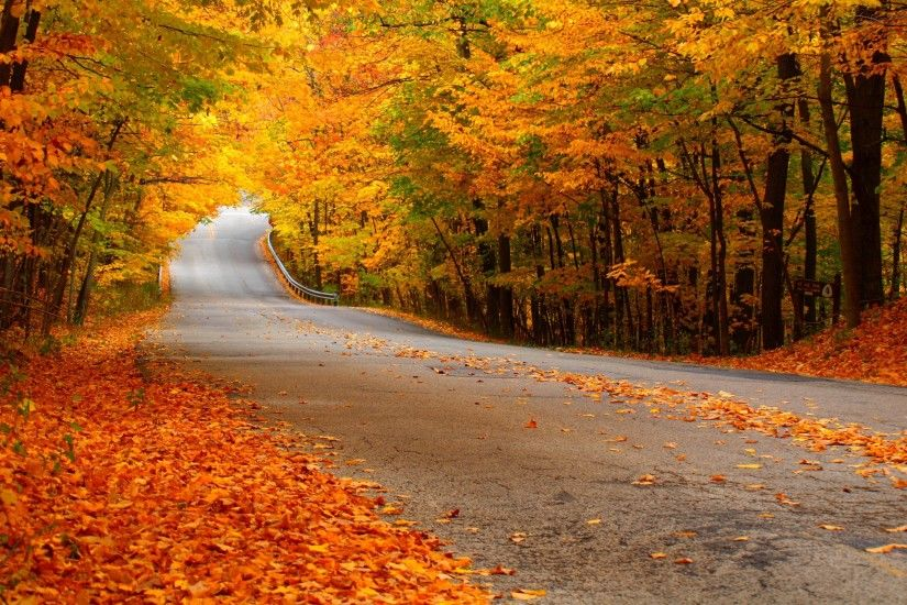 Download and View Full Size Photo. This Road with Falling Autumn Leaves ...