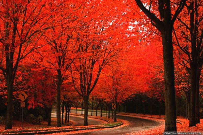 HD : 1280x720 | 1366x768 | 1920x1080 | 2560x1440 · By road beautiful autumn  wallpapers