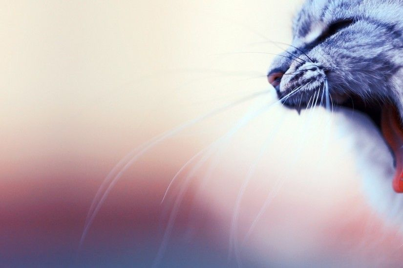 Download now full hd wallpaper cat, yawn mustache blurry background ...