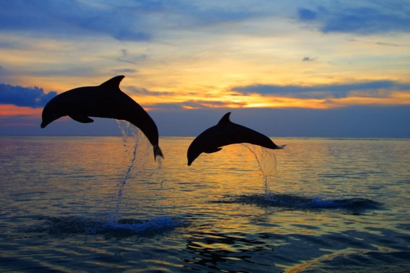 Dolphins Caribbean - hd wallpapers for windows 7 - Dolphins Caribbean