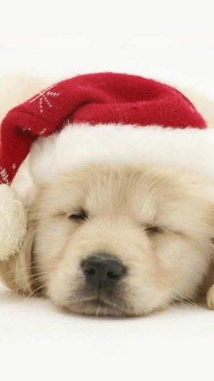 Merry Christmas-Dog - Dogs Wallpaper ID 1287371 - Desktop Nexus Animals