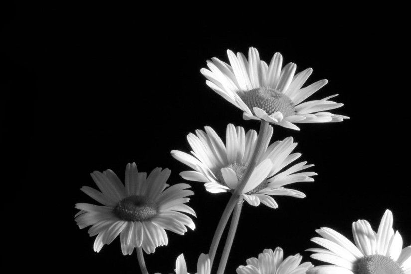 ... black and white flower wallpaper hd for desktop background .