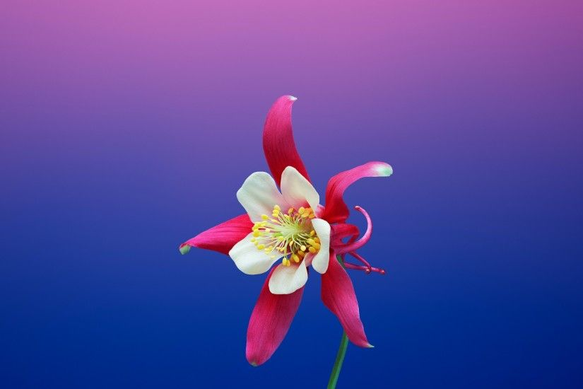 Aquilegia Flower iOS 11 iPhone 8 X Stock