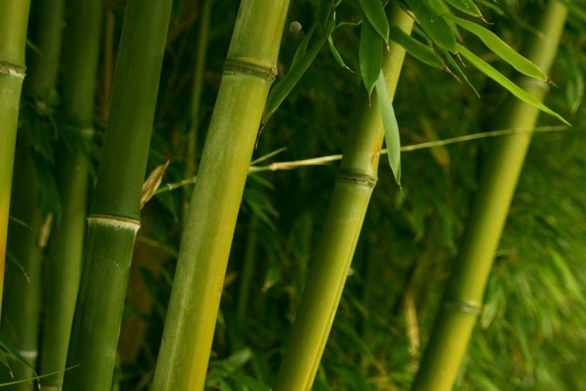 top bamboo wallpaper 1920x1080