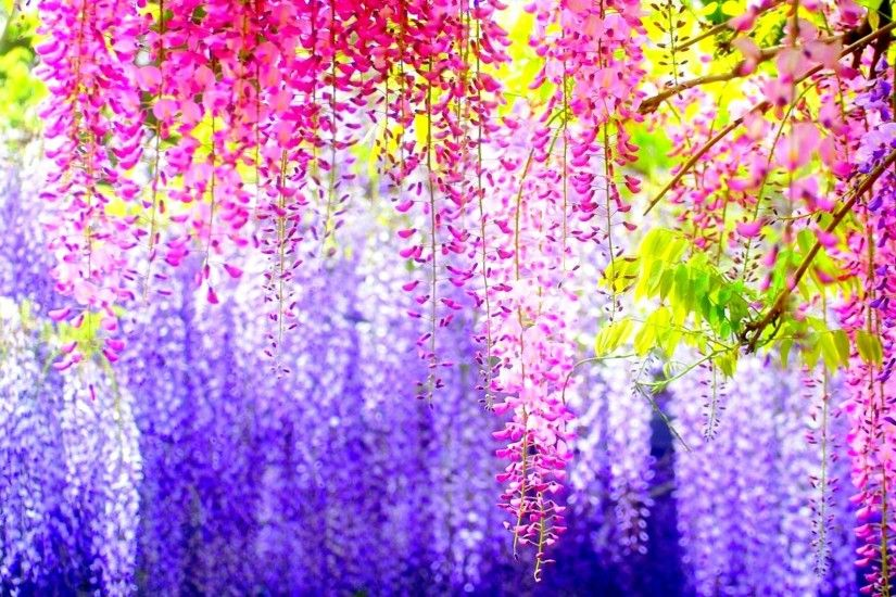 177-spring-background 2595829 6922240-amazing-flowers-pictures ...