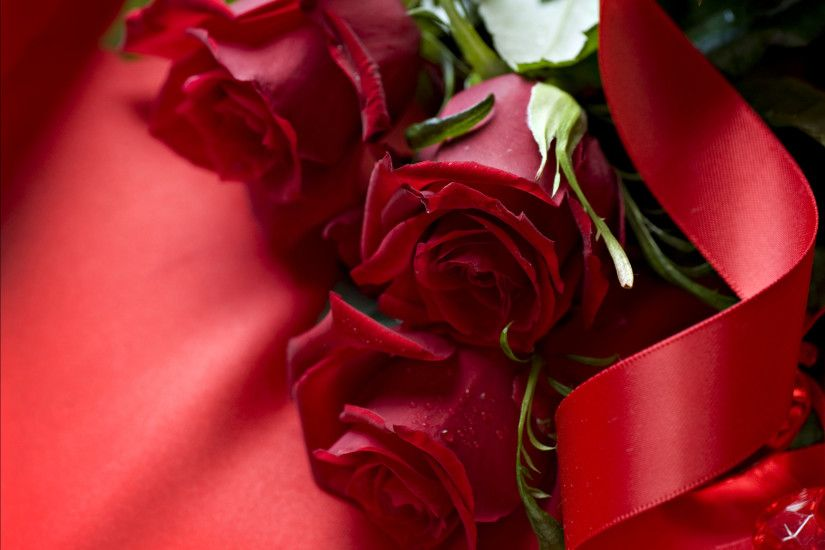 Beautiful Red Rose Flowers Wallpapers Entertainment Only